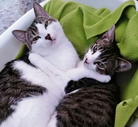 ¡Bruce y Jasper adoptados!