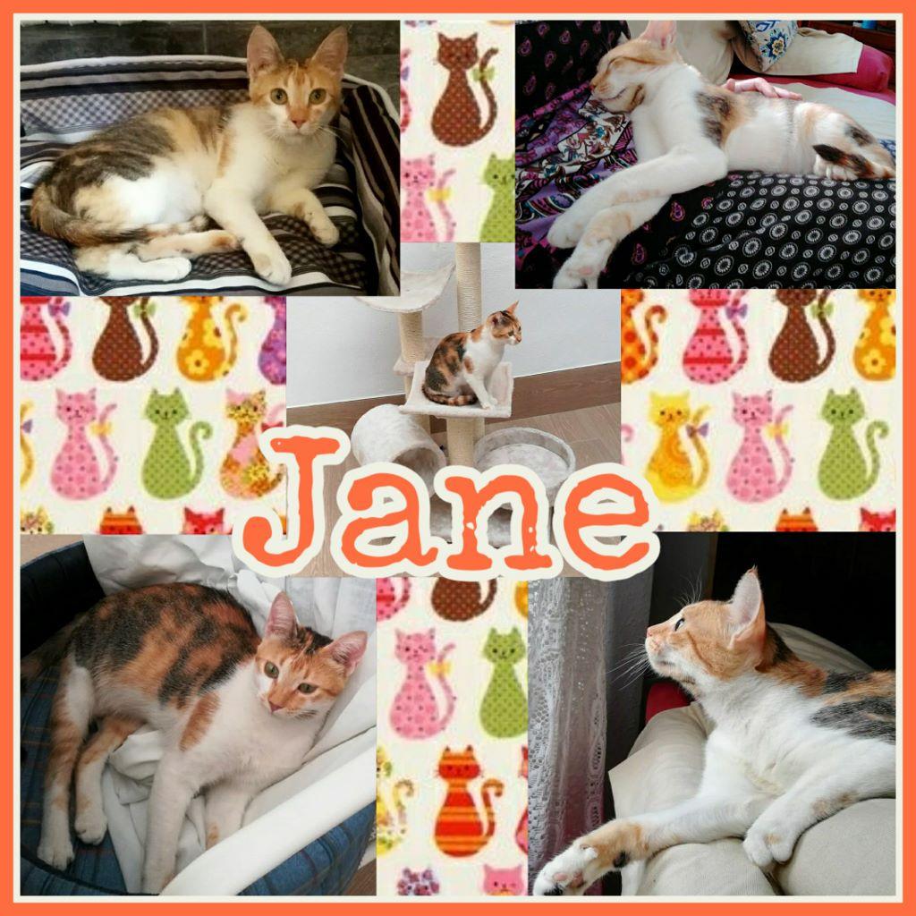 ¡Jane adoptada!