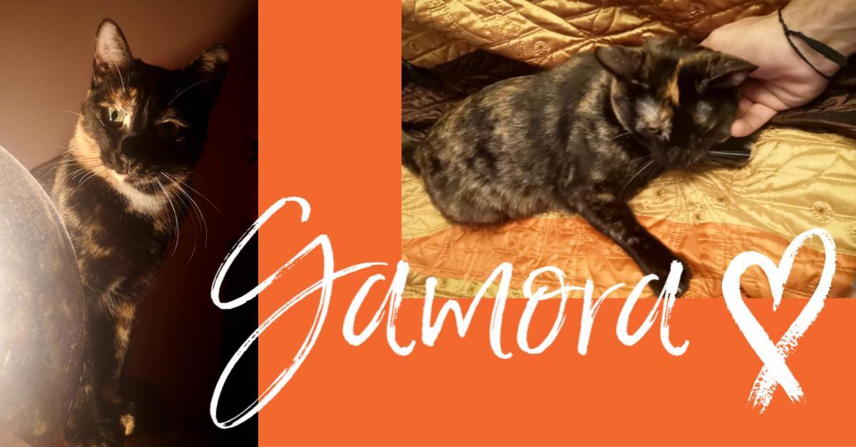 ¡Gamora adoptada!