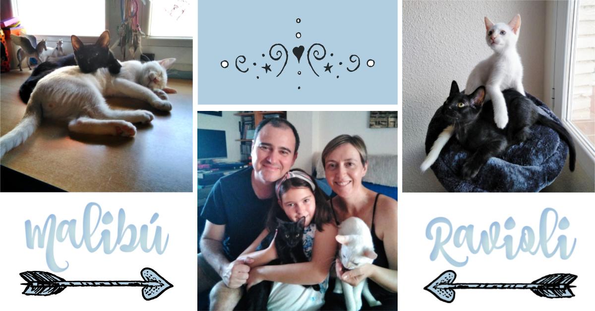 ¡Malibú y Ravioli adoptados!