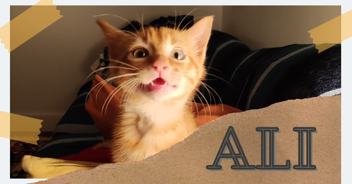 ¡Ali, antes Kai, adoptado!
