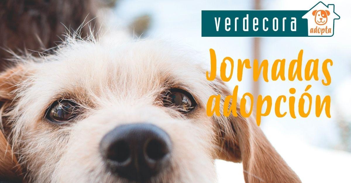 Jornadas de Adopción en Verdecora